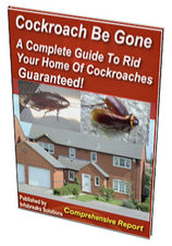 cockroach be gone
